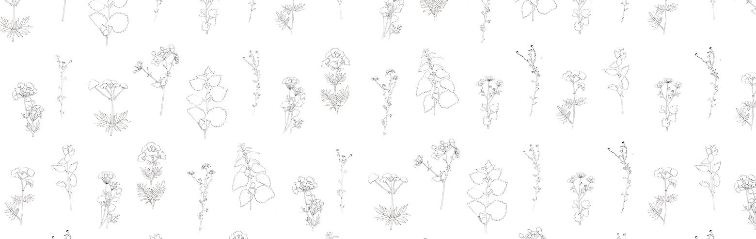 herbarium-content3