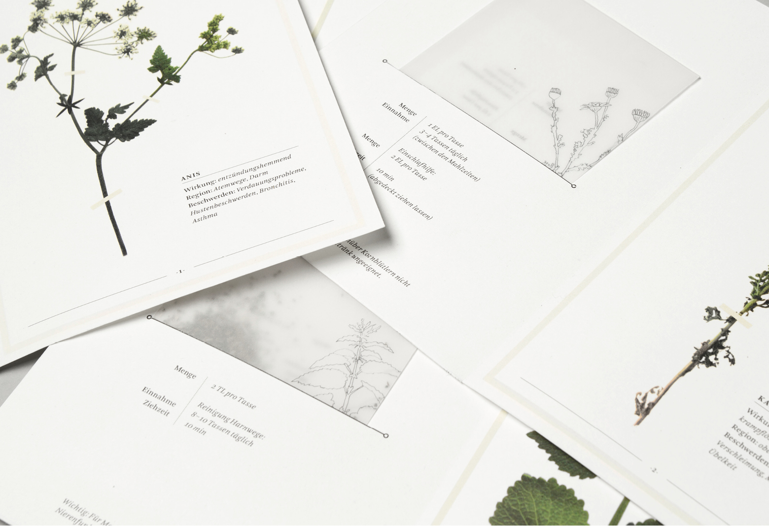 herbarium-content4