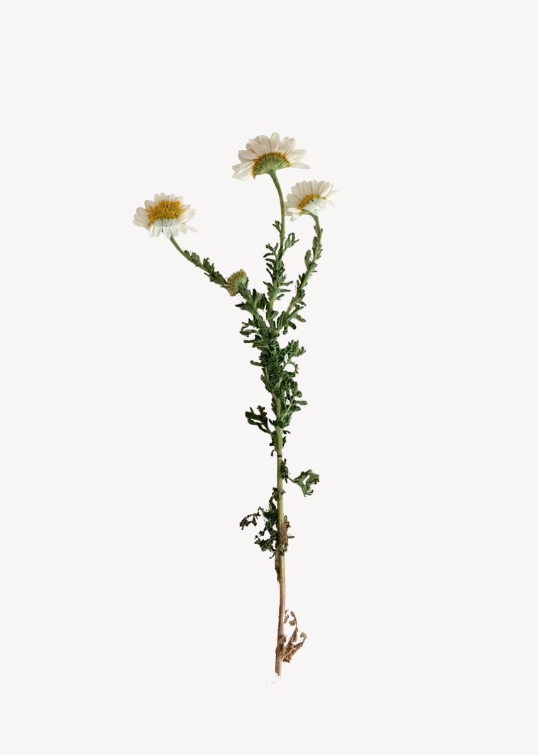 herbarium-content8